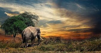 20190213-business-process-improvement-story-of-the-elephant